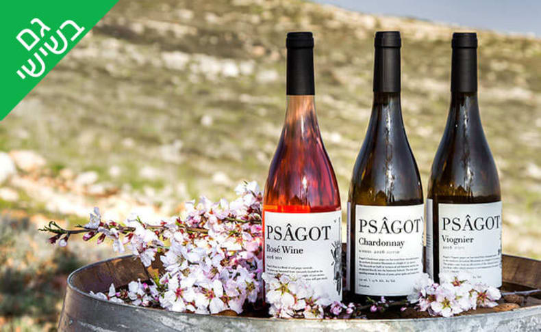 סיור טעימות יין וגבינות ביקב