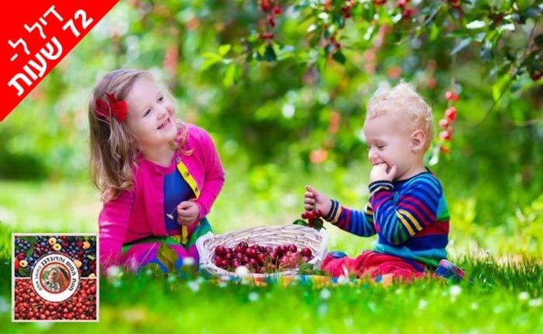 קטיף דובדבנים ופירות יער בגולן