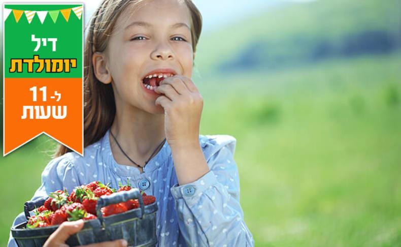 קטיף תות, טעימות וסלסלת 1 ק